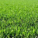 Kunstgras versus 'gewoon gras'