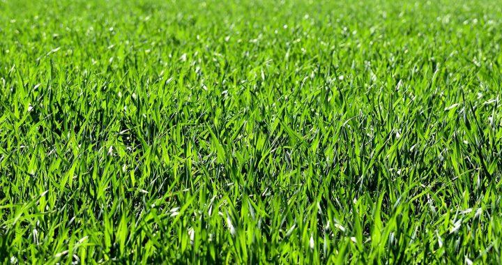 meadow-2184989_1280