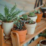 Kunstplanten: wel groen in huis, maar geen grote tijdsinvestering